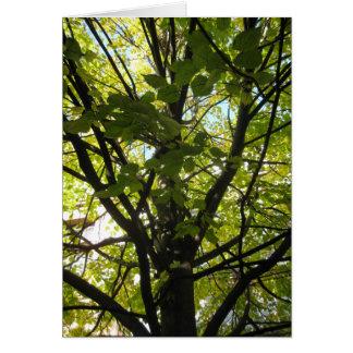シナノキの葉 カード