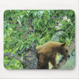 シナモンは《植物》アスペンの木のツキノワグマを着色しました マウスパッド