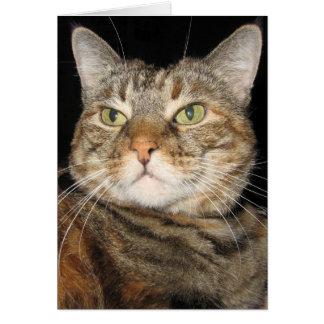 シナモン猫 カード