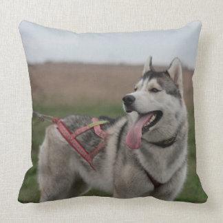 シベリアンハスキーのそり犬 クッション