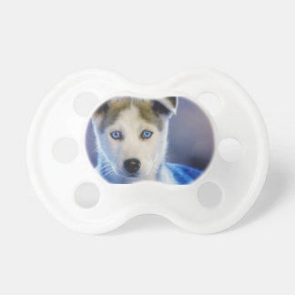 シベリアンハスキーの子犬 おしゃぶり