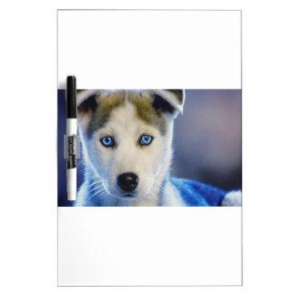 シベリアンハスキーの子犬 ホワイトボード