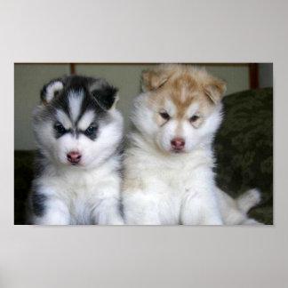 シベリアンハスキーの子犬 ポスター