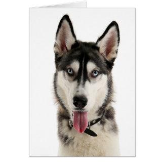 シベリアンハスキーの小犬こんにちは愛失敗、 カード