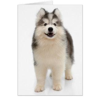 シベリアンハスキーの小犬のブランクのメッセージカード カード