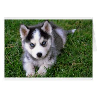 シベリアンハスキーの小犬のブランクの挨拶のメッセージカード カード