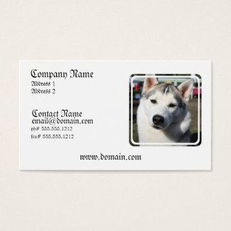 シベリアンハスキー犬の写真の名刺 名刺