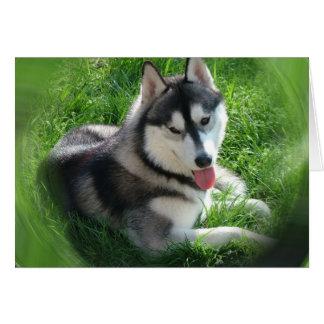 シベリアンハスキー犬の挨拶状 カード