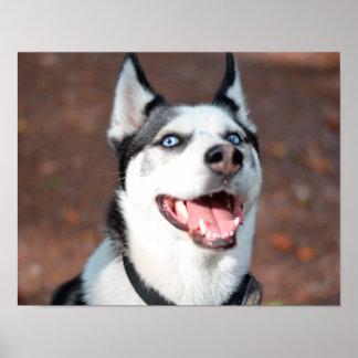 シベリアンハスキー犬の青い目 ポスター