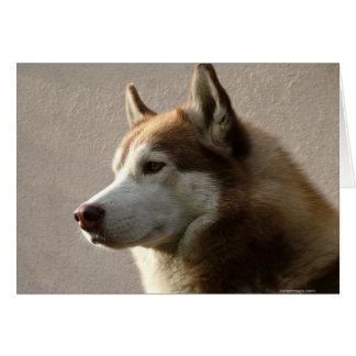 シベリアンハスキー犬 カード