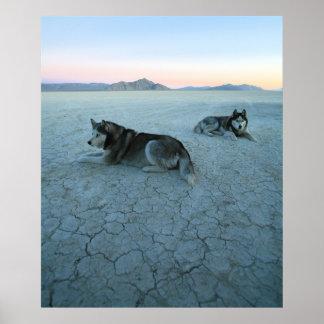 シベリアンハスキー犬、地球温暖化 ポスター