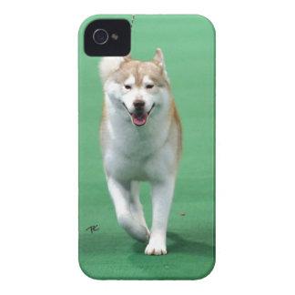 シベリアンハスキーIPHONE 4Sの箱 Case-Mate iPhone 4 ケース