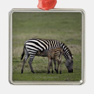 シマウマおよび看護の子馬、タンザニア シルバーカラー正方形オーナメント