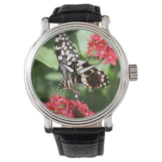 シマウマのストライプのな蝶 腕時計