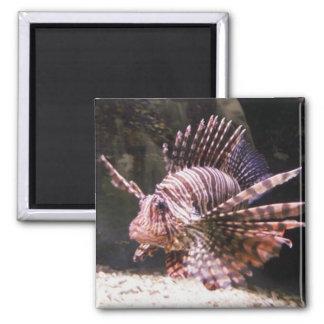 シマウマのライオンの魚の磁石 マグネット