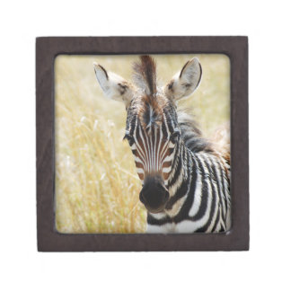 シマウマの子馬のストライプなベビーの写真撮影 ギフトボックス