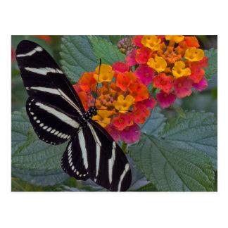 シマウマの蝶 ポストカード