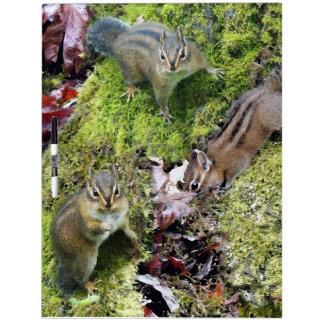 シマリス動物の野性生物の写真撮影 ホワイトボード