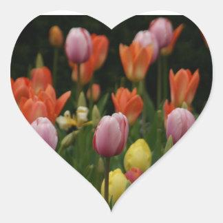 シャクヤク、シクラメンおよびチューリップの分野は開花します ハートシール