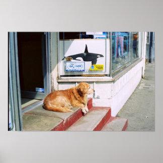 シャチおよび犬 ポスター