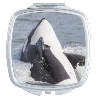 シャチのクジラの破ること