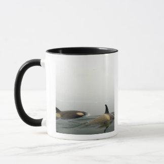 シャチ(シャチ)、Orcinusのシャチ、ポッド2 マグカップ