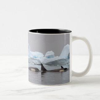 シャチ(シャチ)、Orcinusのシャチ、ポッド ツートーンマグカップ
