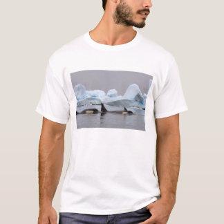 シャチ(シャチ)、Orcinusのシャチ、ポッド Tシャツ