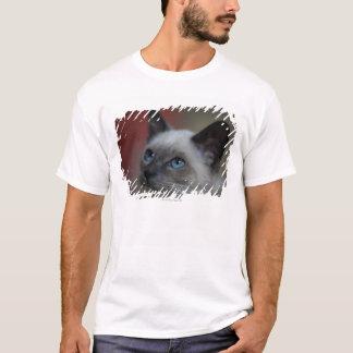 シャムの子ネコ Tシャツ