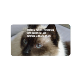 シャムの子猫 宛名ラベル