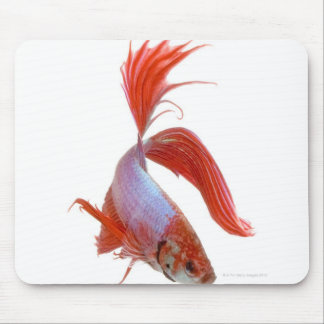 シャムの戦いの魚(Bettaのsplendens) マウスパッド