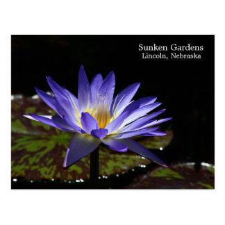 シャムの熱帯《植物》スイレンのSGの星1 2015年 ポストカード