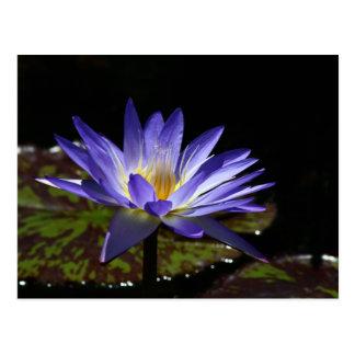シャムの熱帯《植物》スイレン2 2015年のSGの星 ポストカード
