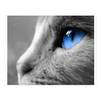 シャムの青い目 ポストカード