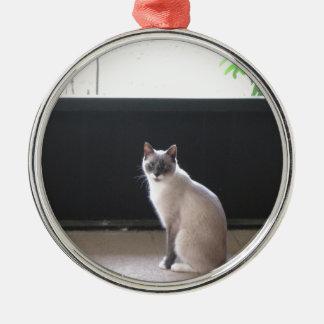 シャム猫の写真 メタルオーナメント