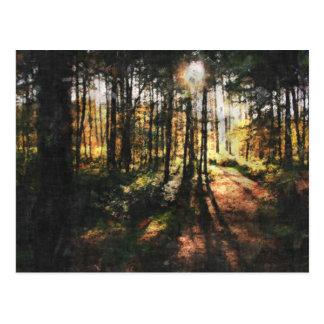 シャーウッド森の日没 ポストカード