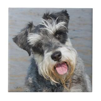 シュナウツァーのミニチュア犬のかわいく美しい写真 タイル