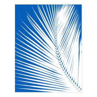 シュロの葉-コバルトブルーの白 ポストカード