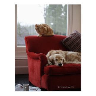 ショウガの虎猫猫を持つゴールデン・リトリーバー犬 ポストカード