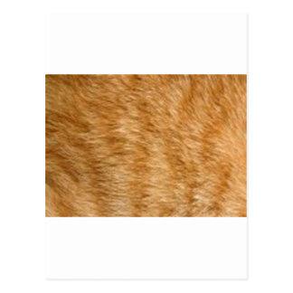 ショウガ猫の毛皮 ポストカード