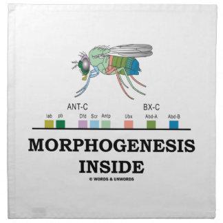 ショウジョウバエのミバエの遺伝子の中の形態形成 ナプキンクロス