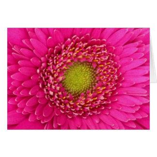 ショッキングピンクのガーベラのデイジーの挨拶状-ブランク カード