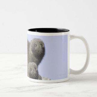 シロアリの小山の小型マングースのグループ ツートーンマグカップ