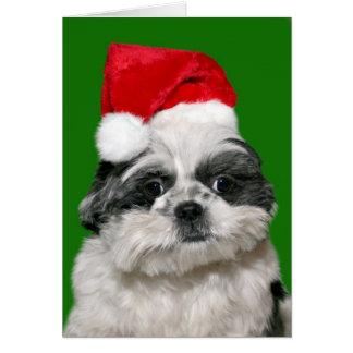 シーズー(犬)のTzuのクリスマス カード