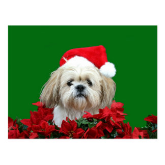 シーズー(犬)のTzuのクリスマス ポストカード