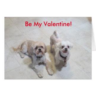 シーズー(犬)のTzuのバレンタイン カード