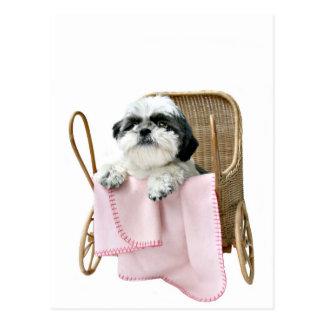 シーズー(犬)のTzuのベビーカー ポストカード