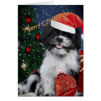 シーズー(犬)のTzuのメリークリスマスカード カード