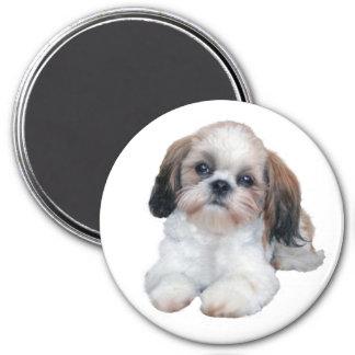 シーズー(犬)のTzuの子犬の磁石 マグネット