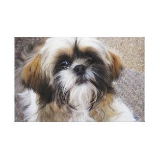 シーズー(犬)のTzuの子犬 キャンバスプリント